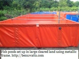 Reinforced tarpaulin fish pond set up on farmland using galvanized pipes