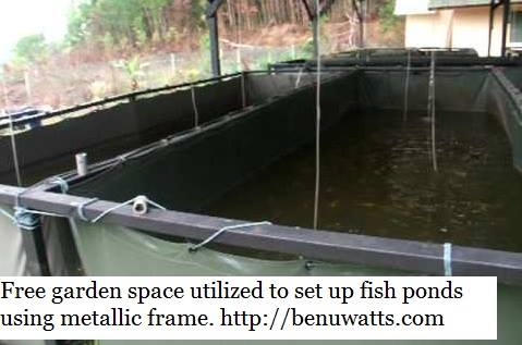 Reinforced tarpaulin fish ponds set up at backyard using galvanized pipes