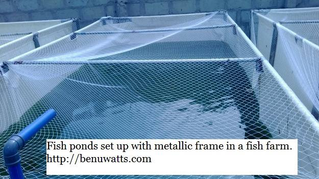 Fish pond set up using galvanized pipe