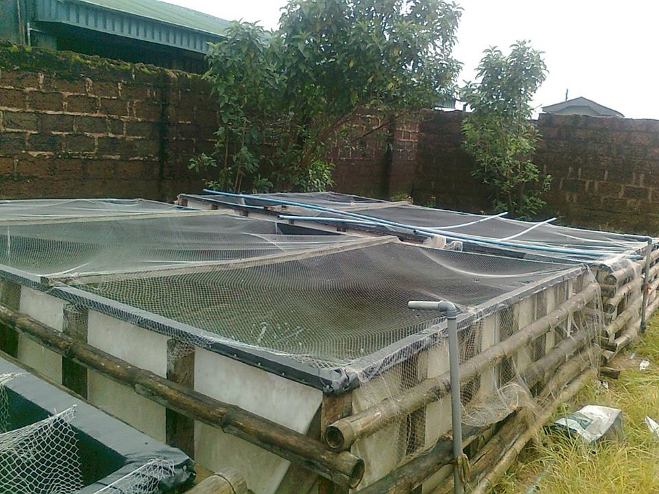Innovative and affordable fish pond made of Benuwatts Reinforced tarpaulin and Bamboo